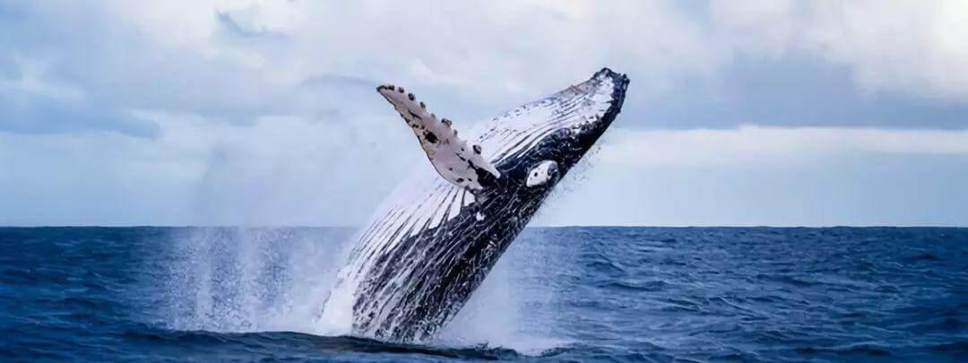 中国南海首次发现鲸落:一鲸落,万物生!这是世界上最浪漫的死亡